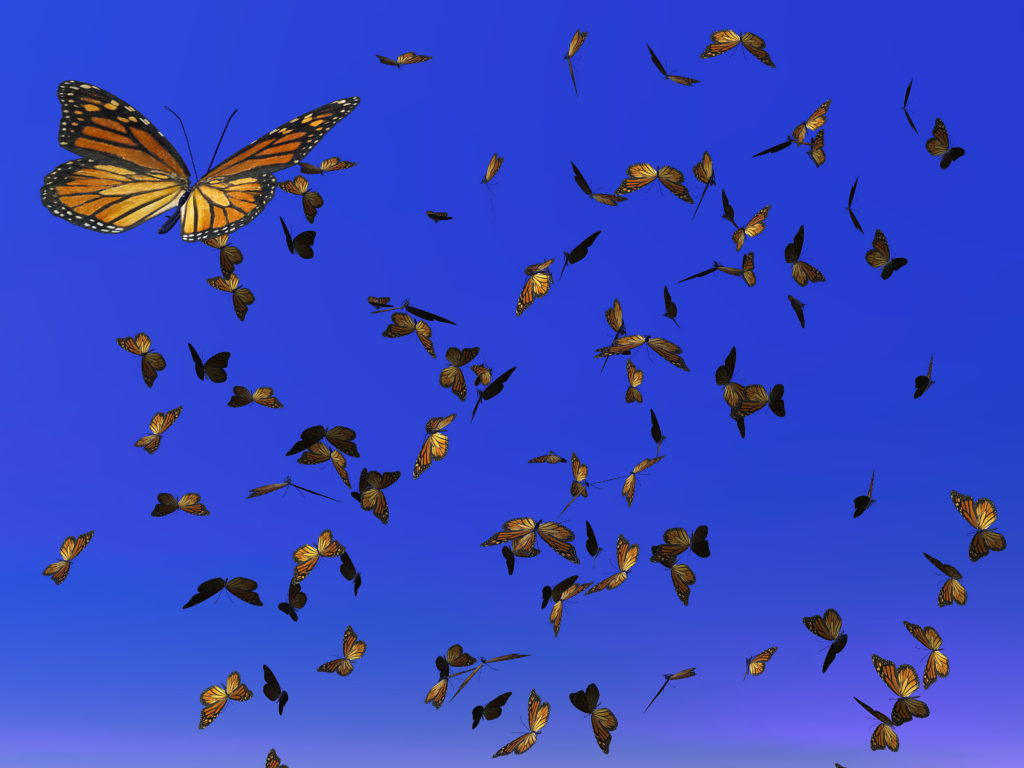 Monarch Butterflies Migrating in Clear Blue Sky